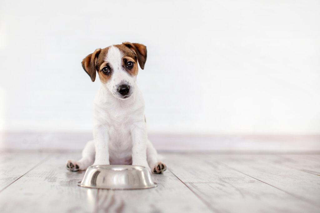 Oligoelementi per cani: tutto ciò che devi sapere