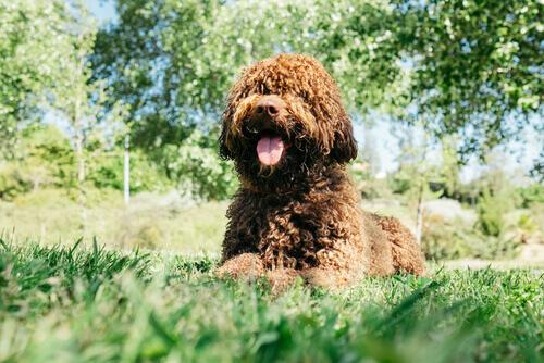 L'olio di semi di lino fa bene ai cani?