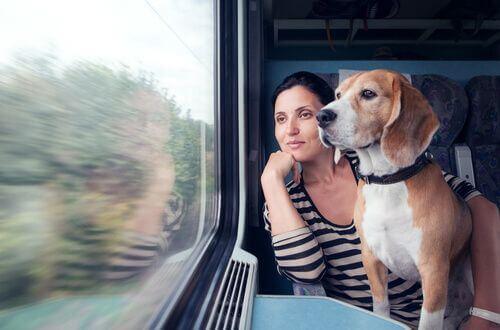 Animali sui mezzi pubblici, in treno col cane.