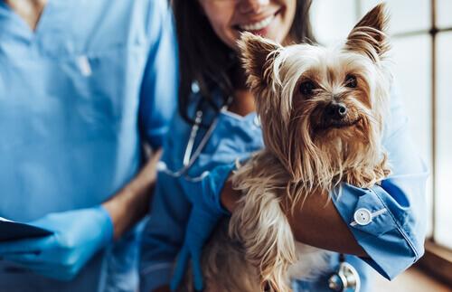 Cane dopo una visita dal veterinario.