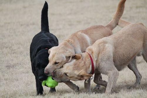 Giochi all'aria aperta con vari cani.