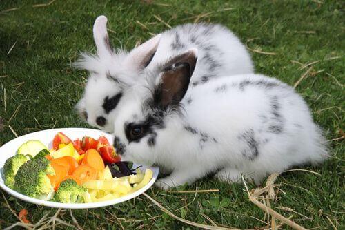 Conigli e spinaci. Con attenzione.