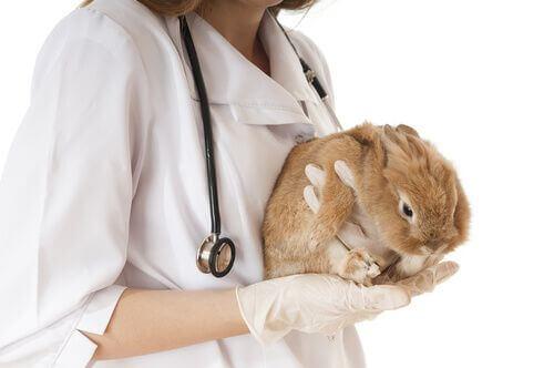 Quali sono le malattie più comuni nei conigli?