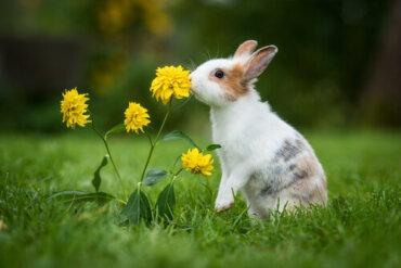 4 consigli per allungare la vita del vostro coniglio