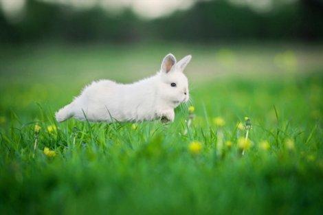 Allungare la vita del coniglio: coniglio che corre su un prato.