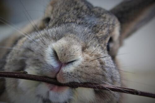 5 consigli su che cosa fare se il vostro coniglio vi morde