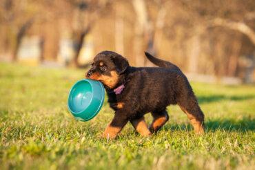 5 nutrienti molto importanti per i cuccioli