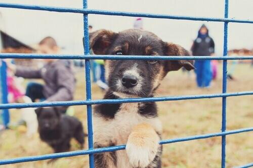Come denunciare un ricovero per animali