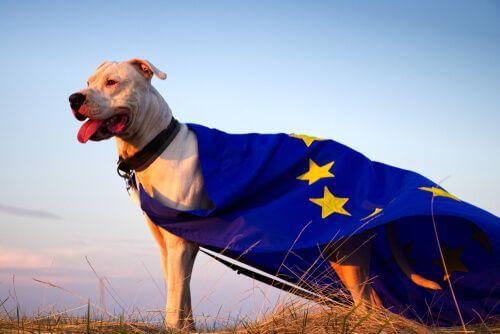 Il benessere animale nell'Unione Europea