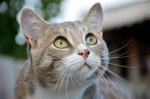 Primo piano di un gatto.