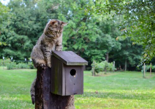 Convivenza tra gatti e uccelli.