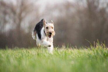 Giochi all'aria aperta da fare con il vostro cane