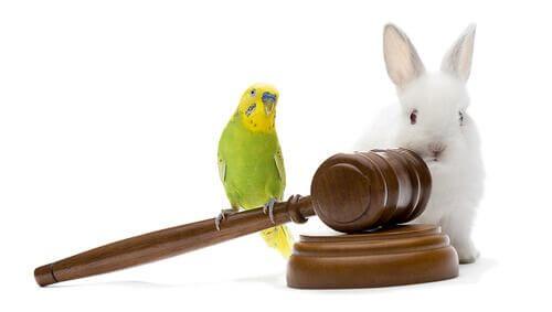 Diritti internazionali degli animali.