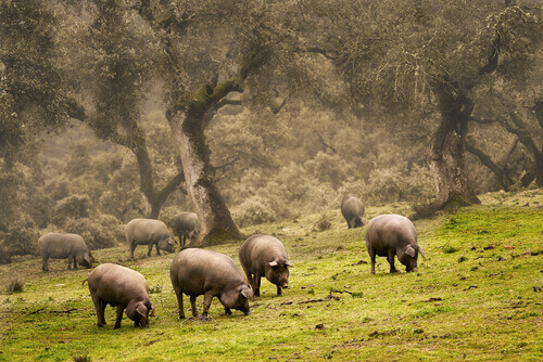 La Dehesa spagnola, un ecosistema ricco di biodiversità