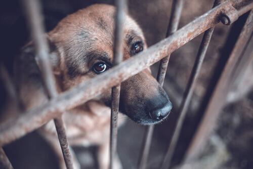 Cane triste dentro una gabbia in un canile.