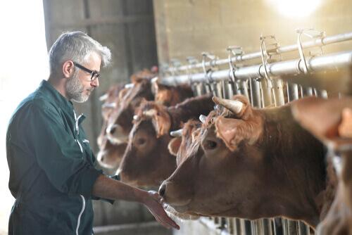 Malattie emergenti del bestiame: quali conseguenze hanno?