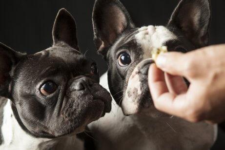 Snack per cani.