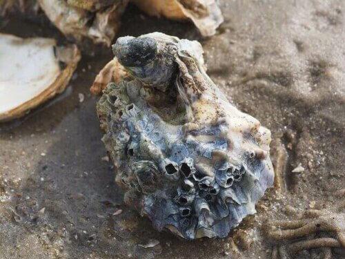 Ostriche: alimentazione e riproduzione