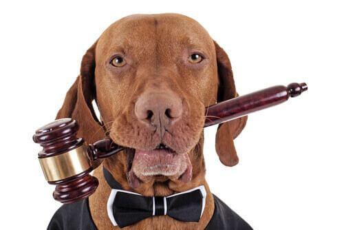 Processi contro gli animali e sentenze assurde nella storia