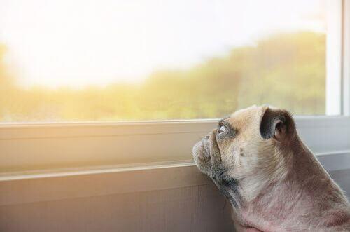 Animali domestici depressi: cosa si può fare?