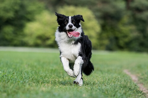 Qual è la razza di cane più nervosa?