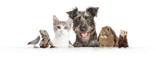 Vivere con più animali in casa.