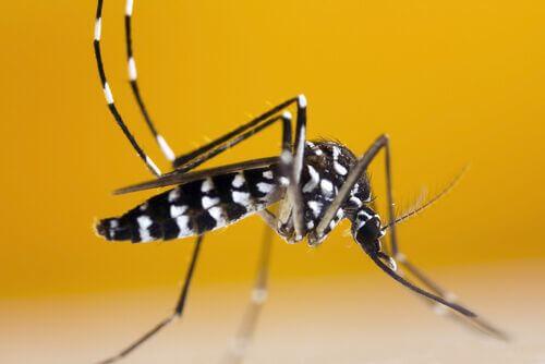 Zanzara tigre: come riconoscerla e perché è così dannosa?