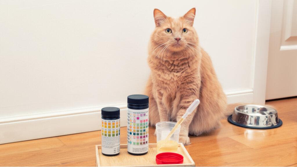 Urolitiasi nei gatti: cause, sintomi e trattamento