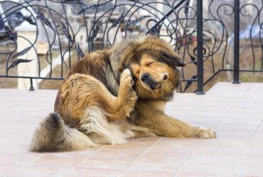 Allergeni nei cani: i più comuni e cosa fare