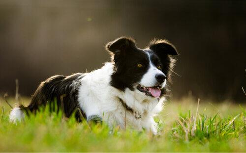 Un cane eredita 5 milioni di dollari dal padrone e diventa milionario