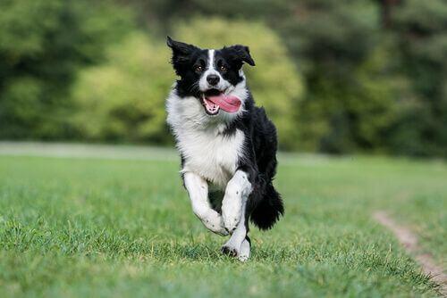 6 razze di cani tra le più sane e resistenti