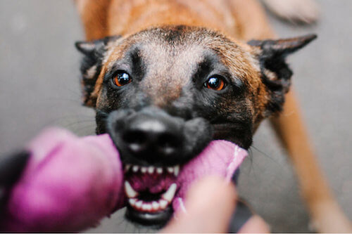 Il linguaggio del corpo nei cani: tutti i segreti
