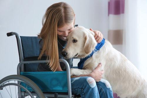 Cane che assiste una bambina sulla sedia a rotelle.