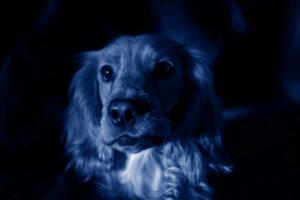 Il misterioso caso dei cani blu in Russia
