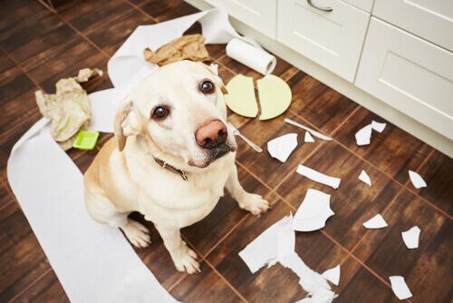 Cane che distrugge la cucina.