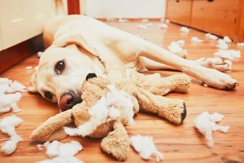 Giocattoli non adatti ai cani. Cane con disturbi comportamentali.