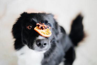 Antiossidanti nel cibo per cani: a cosa servono?