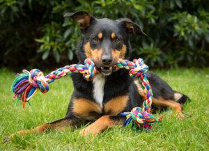4 oggetti o giocattoli non adatti ai cani