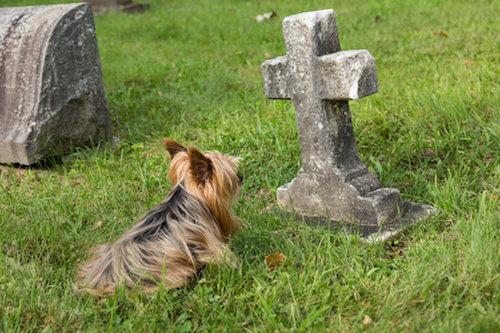 Il cane sta per morire: i dieci segnali