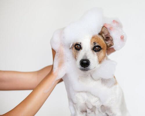 Padrone che lava il cane.