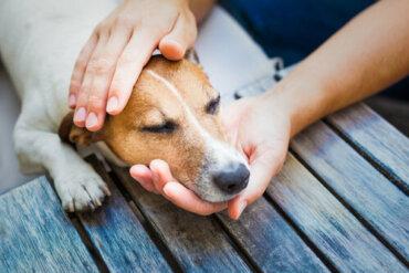 8 consigli per curare il raffreddore nei cani