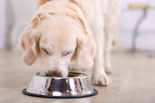 Cane che mangia da ciotola.