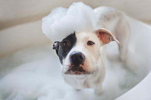 Cane che fa il bagno.