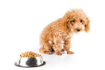 Il cane non aumenta di peso: 6 possibili cause