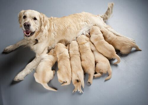 Sterilizzare un cane: i pro ed i contro secondo gli esperti