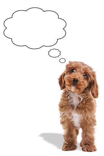 I cani possono dimenticare le persone?