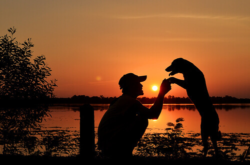 Cane con il padrone al tramonto.
