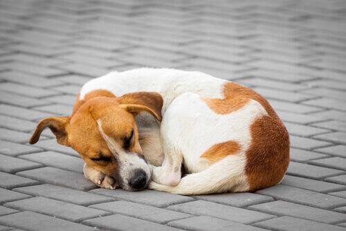 Cane randagio che dorme.