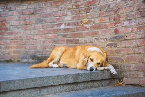 Cane sterilizzato che riposa su un gradino di una scala.