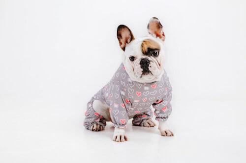 Ai cani piace indossare dei vestiti? Sono davvero comodi?